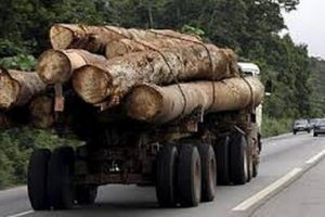 Toxic Trade: Forest Crime in Gabon and the Republic of Congo and Contamination of the US Market